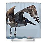Pelican V Shower Curtain