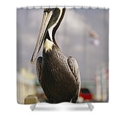 Pelican Visiting City Marina Shower Curtain