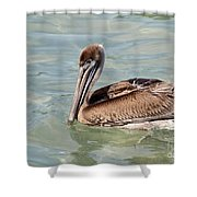 Pelican Waiting For A Catch Shower Curtain
