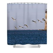 Pelicans And Morris Island Light 1 Shower Curtain