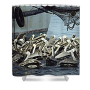 Pelicans Float In Water Near A Shrimp Shower Curtain