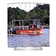 Pelicans Following Boat Shower Curtain