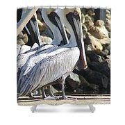 Pelicans Of Keaton Beach Canal Shower Curtain