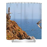 Pelicans Off The Point Shower Curtain