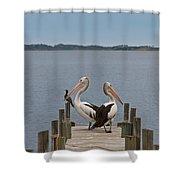 Pelicans On A Timber Landing Pier Mooring Shower Curtain