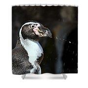Penguin Splash Shower Curtain