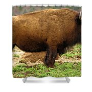 Pennsylvania Bison Shower Curtain