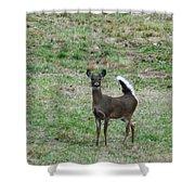 Pennsylvania White Tail Deer Shower Curtain