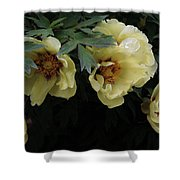 Peony Arch Shower Curtain