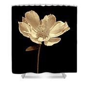 Peony Flower Portrait Sepia Shower Curtain