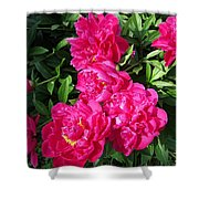 Peony Named Karl Rosenfield Shower Curtain
