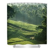People Walking Through Lujeri Tea Shower Curtain
