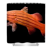 Peppermint Basslet Shower Curtain