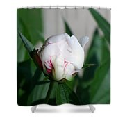 Peppermint Peony Shower Curtain