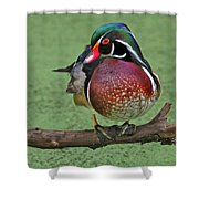 Perched Wood Duck Shower Curtain