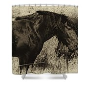 Percheron Prairie Horses Shower Curtain