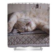 Percy Cat Sleep Stylist Shower Curtain