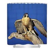 Peregrine Falcon On Perch Shower Curtain