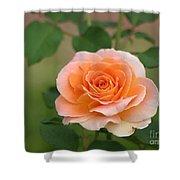 Perfect Peach Petals Shower Curtain
