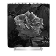 Perfect Rose Shower Curtain