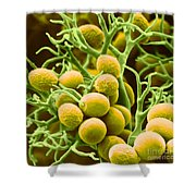 Peronospora Parasitica Shower Curtain