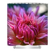 Petal Motion Shower Curtain
