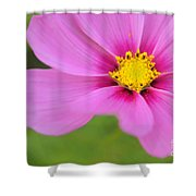 Petaline - P01a Shower Curtain by Variance Collections