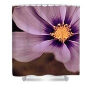 Petaline - P04d Shower Curtain