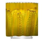 Petals And Dew Drops Shower Curtain