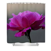 Petals And More Shower Curtain