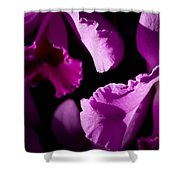 Petals Galore Shower Curtain