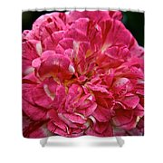 Petals Petals And More Petals Shower Curtain