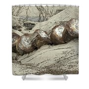 Petrified Forest 1 Shower Curtain