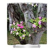 Petunia Tree Shower Curtain