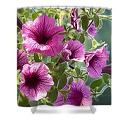 Petunias Shower Curtain