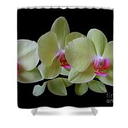 Phalaenopsis Fuller's Sunset Orchid No 1 Shower Curtain