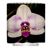 Phalaenopsis White Orchid Shower Curtain