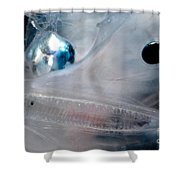 Phantom Anglerfish Shower Curtain