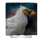 Pharaos Chicken  Shower Curtain