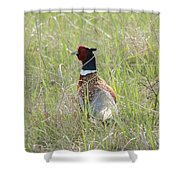 Pheasant In The Grass Shower Curtain