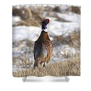 Pheasant In The Winter Shower Curtain