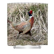 Pheasant Walking Shower Curtain