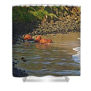 Phillip Island 2 Shower Curtain