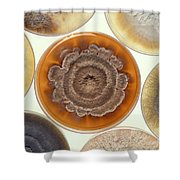Phomopsis Mold Cultures Shower Curtain