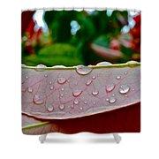 Photinia Veins Shower Curtain
