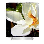 Photo For Sydneys Magnolia Painting Shower Curtain