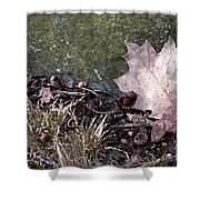 Photo Watercolour Leaf Against Rock Shower Curtain