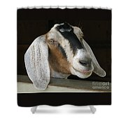 Photogenic Goat Shower Curtain