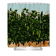 Photoperiodicity In Soybean Plants Shower Curtain