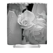 Picket Rose Shower Curtain
